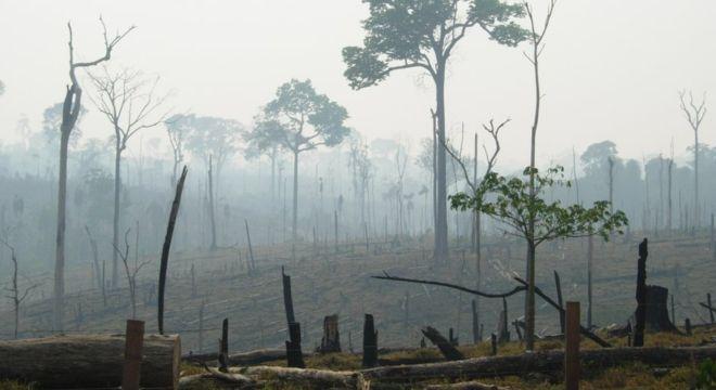 Estudo mostra que 27% do desmatamento global é decorrente da produção de commodities