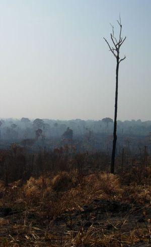 Estudo mapeou todas as razões que levam a alterações ambientais por meio do desmatamento