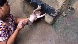 Assista ao momento em que um recém-nascido é resgatado de bueiro na Índia ()