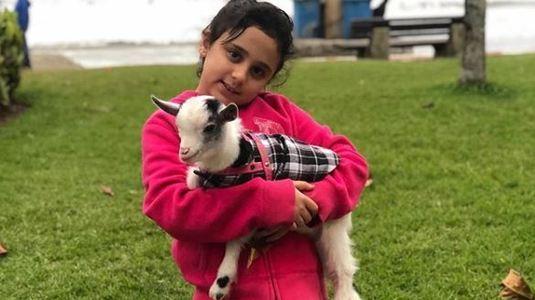Cabra de estimação some e família oferece R$ 2 mil de recompensa (Arquivo Pessoal)