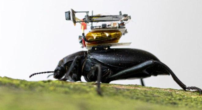 """Assim como os besouros, a """"Beetlecam"""" possui amplo campo de visão"""