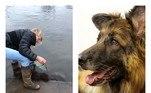Em 6 de janeiro de 2020, Bella, uma cachorra da raça pastor-alemão, à época com 10 anos, quase morreu afogada depois de ter sido cruelmente abandonada por seus antigos donos