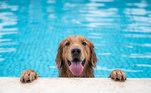 Leishmaniose: cachorro não transmite e gato também pode ter.O que muita gente pensa é que os cachorros são os principais responsáveis pela transmissão da doença, mas eles são apenas reservatórios. Além disso, os gatos também estão propensos a contrair a doença.