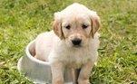 Cachorro também pode fazer xixi na cama.Alguns animais podem sofrer de incontinência urinária, principalmente na fase idosa.