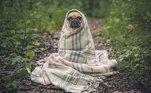 Parecida com gripe humana, os cães podem ter tosse dos canis.A tosse dos canis é uma síndrome respiratória complexa transmitida por vírus ou bactérias que pode afetar animais de todas as raças e idades, e causar crises de tosse nos cachorros. A doença pode ser transmitida aos animais sadios tanto pelo contato com um pet doente como pelo ar. Por isso a vacinação de administração intranasal, que deve ser feita anualmente, é a medida mais efetiva e indolor de prevenção