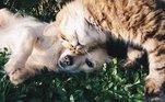 Animais também podem ter diabetes.Cães e gatos são bastante suscetíveis à doença e esse diagnóstico é muito mais comum do que se imagina.