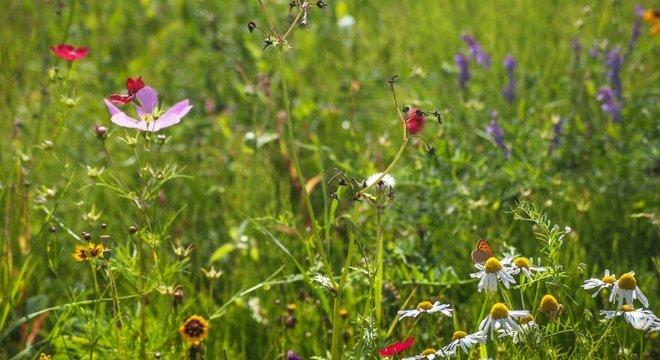 Devemos agradecer aos vírus pela biodiversidade do planeta