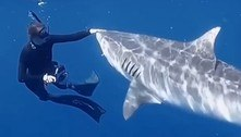 Bióloga ensina a repelir tubarões: 'Situação rara, mas pode acontecer'
