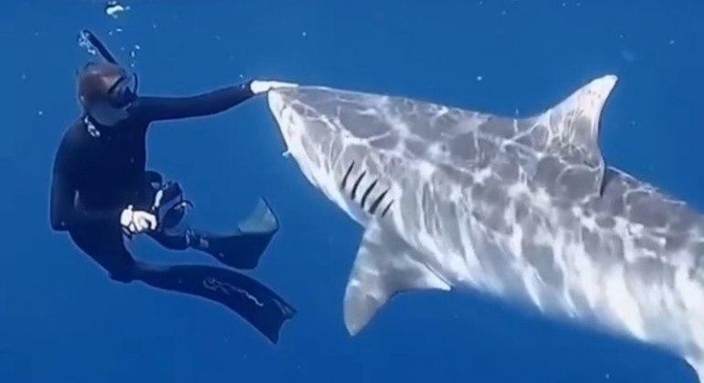 Bióloga marinha registrou vídeo no qual ensina a afugentar um tubarão-tigre