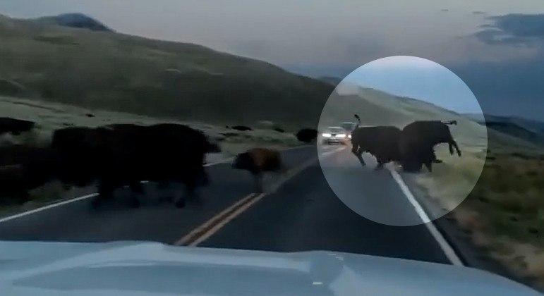 Bisão em modo 'full pistola' arremessou rival de estrada após cabeçada