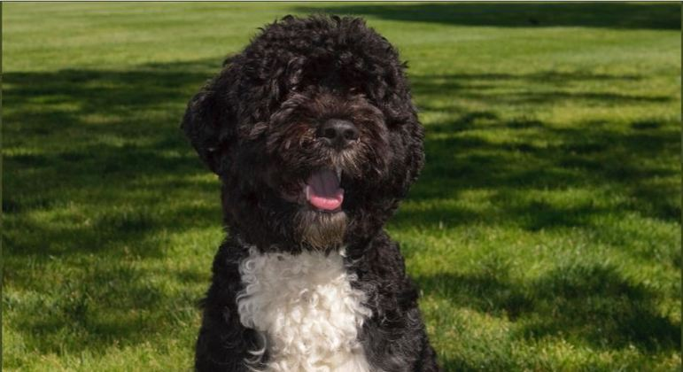 O cão Bo foi adotado logo no início do governo de Barack Obama, em 2009