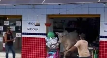 Boi foi flagrado fugindo de dentro da loja