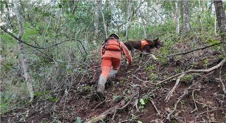 Bombeiros fazem buscas até em mata fechada