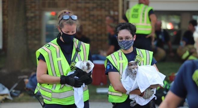 Os bichinhos de estimação ficaram bem após serem resgatados
