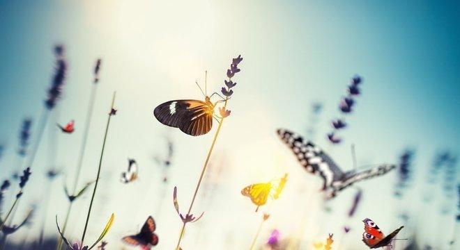 A população de diversas espécies de borboletas está em declínio, além de abelhas e libélulas
