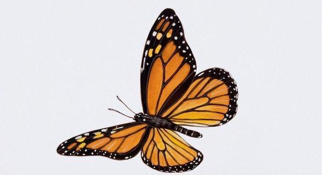 População de borboletas-monarca caiu 86% em 2018 na Califórnia