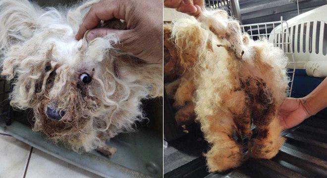 A cachorra viveu durante anos dentro de uma gaiola
