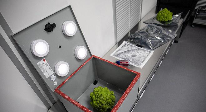 Brócolis em uma caixa