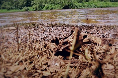 Vale deverá remover lama espalhada pela cidade