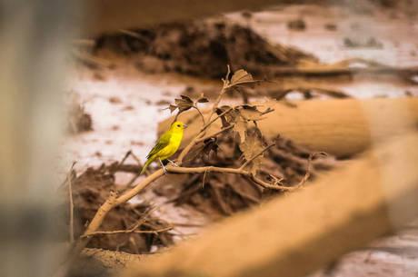 Mais de 150 espécies de aves são encontradas na região
