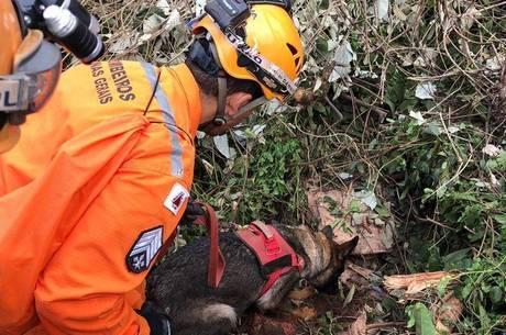 Cão farejador ajudou a encontrar corpo de vítima