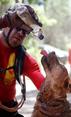 Cães-farejadores são essenciais no resgate de vítimas da lama