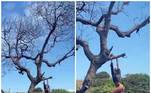 Marquezine não só se pendurou em uma árvore como fez pose para foto.
