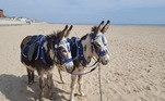 Amantes de animais iniciaram um tornado de críticas e reclamações por causa de burros obrigados a carregar banhistas em praias do Reino Unido, país que vive uma recente onda de calor