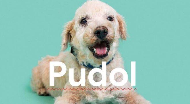 Pudol está entre os termos pets mais procurados no Google