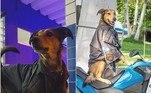 Cabo Oliveira é um cão policial lotado no 17º Batalhão da Polícia Militar do Rio de Janeiro, localizado na Ilha do Governador. O vira-lata destemido e muito trabalhador compartilha sua rotina com 17,4 mil seguidores no Instagram. Veja os melhores momentos a seguir