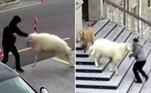 Em dezembro, umacabra, ovelha e três cordeiros invadiram e tocaram o terror em uma cidade turca
