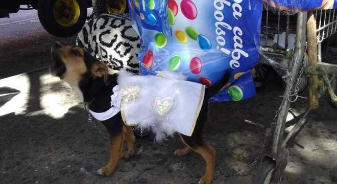 Cachorrinha também participou da cerimônia