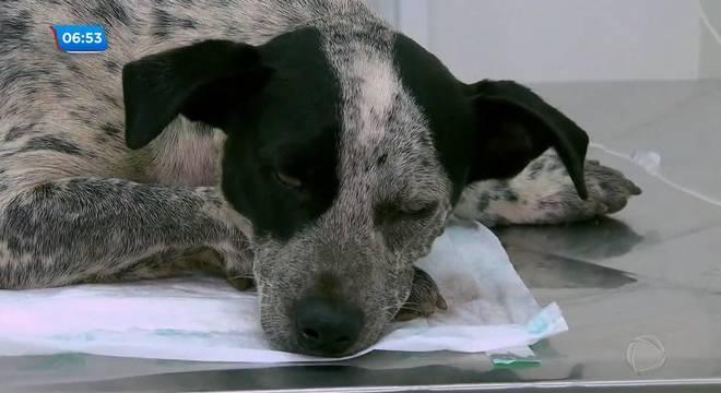 Caminhoneiro é preso suspeito de atirar contra cachorra na zona norte de SP