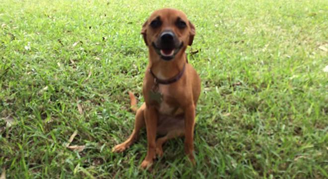 cbe3342fc4 Não vou levá-la no; Vicki foi adotada com apenas dois meses e hoje tem 4  anos ...