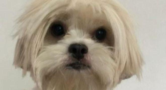Cachorra Meg fugiu após barulho de foguetório e passagem de caminhão na rua