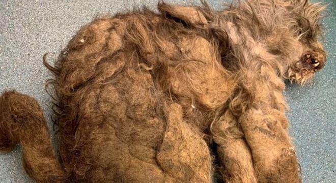 Veterinários não sabiam que se tratava de uma cachorra