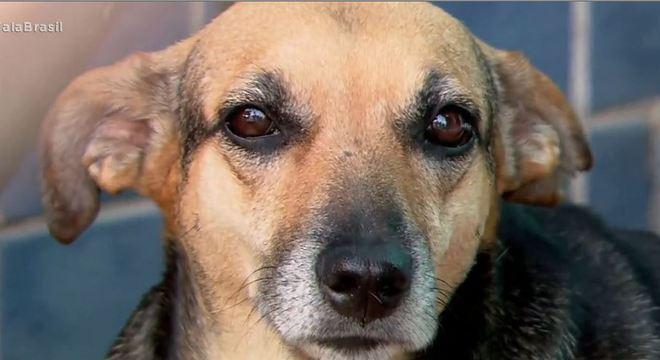 Cachorra Princesa foi adotada após morte do dono que era morador de rua