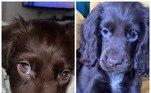 Assim como os humanos, cachorro tem cílios para proteger os olhos de agressões externasLeia mais:Alerta de fofura: desafio na web mostra cães exibindo os dentinhos