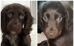 A inglesa CaitlinBaker, de 20 anos, compartilhou fotos da cachorrinha de estimação, mas não imaginou tamanha repercussão
