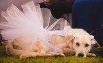 E o que chamou a atenção nem foi tanto o vestido da noiva, mas sim o look da cachorrinha que teve direito a body e saia de tuleVeja também:Cachorra caminha por duas semanas tentando voltar para casa