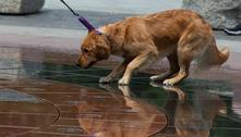 Donos de cães podem passar covid para seus pets, aponta estudo
