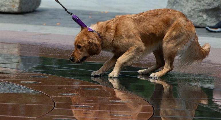 Estudo mostra que animais de estimação podem contrair covid-19