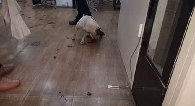 Após ferida e sangrando, cadela tentou buscar abrigo