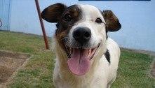 Cães diferenciam algumas palavras ditas por humanos, diz estudo