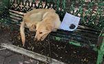 Um cachorro abandonado chamou atenção de quem passava em umarua movimentada da Cidade do México. O vira-lata estava acorrentado a um bancono canteiro central e deitado ao lado de um bilhete de papelLeia também:Amarrado em árvore, cachorro é abandonado com bilhete no RJ