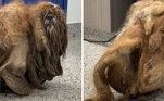 Simon foi resgatado pelaorganização sem fins lucrativos KC Pet Project, que atua nos Estados Unidos