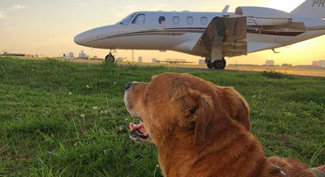 O cachorro acolhido no aeroporto observava as aeronaves