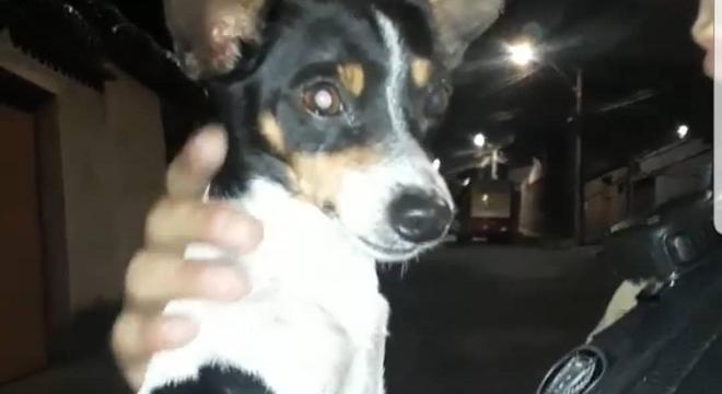 Animal foi adotado por um dos policiais
