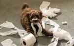Seu cachorro disfarça depois que apronta? Tutores de todo o mundo compartilharam fotos de seus animais pegos no flagra. Eles detonam a casa, mas fingem não saber o que está acontecendo. Selecionamos os 7 melhores focinhos para quem é apaixonado por cães levados. Confira!