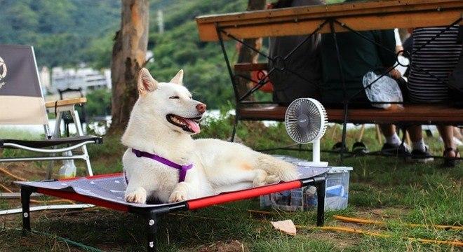 Cães podem ficar indispostos e até mudar o comportamento por causa do calor